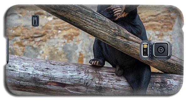 Black Bear Cub Sitting On Tree Trunk Galaxy S5 Case