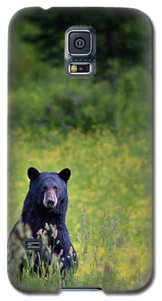 Black Bear Lookin At Me Galaxy S5 Case