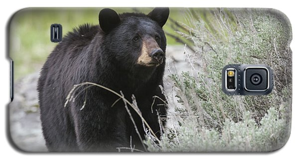Black Bear Sow Galaxy S5 Case
