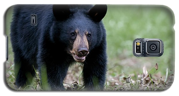 Galaxy S5 Case featuring the photograph Black Bear by Tyson and Kathy Smith