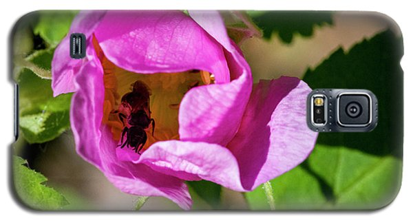 Galaxy S5 Case featuring the photograph Black Bee Collecting Pollen by Darcy Michaelchuk