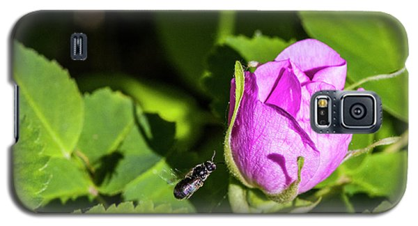 Galaxy S5 Case featuring the photograph Black Bee On Approach by Darcy Michaelchuk