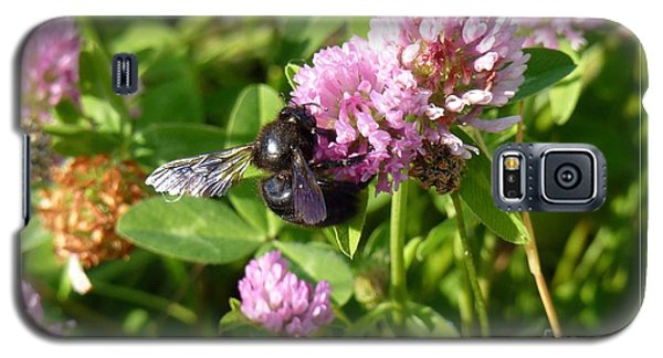 Black Bee On Small Purple Flower Galaxy S5 Case by Jean Bernard Roussilhe