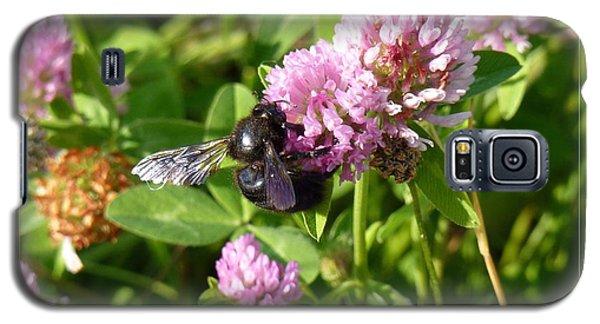 Black Bee On Small Purple Flower Galaxy S5 Case