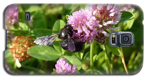 Black Bee On Small Purple Flower Galaxy S5 Case