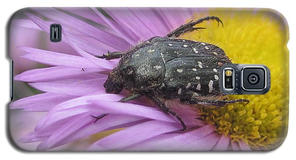 Galaxy S5 Case featuring the photograph Black Beetle by Irina Hays