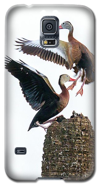 Black-bellied Whistling Duck Dance Galaxy S5 Case