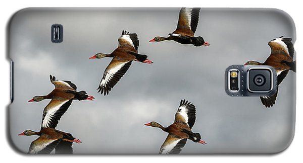 Black Bellied Whistling Ducks Galaxy S5 Case