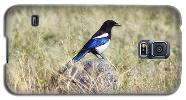 Black-billed Magpie Galaxy S5 Case