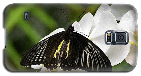Black Butterfly Galaxy S5 Case