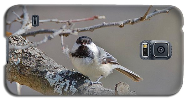 Black Capped Chickadee 1109 Galaxy S5 Case by Michael Peychich