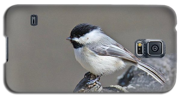 Black Capped Chickadee 1128 Galaxy S5 Case by Michael Peychich