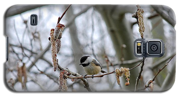Galaxy S5 Case featuring the photograph Black-capped Chickadee 20120321_38a by Tina Hopkins