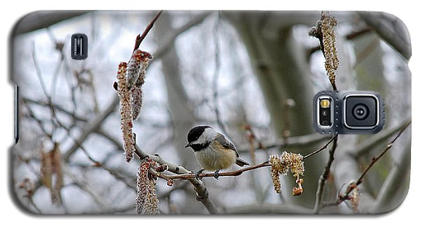 Black-capped Chickadee 20120321_38a Galaxy S5 Case