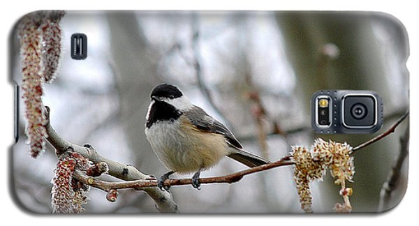 Galaxy S5 Case featuring the photograph Black-capped Chickadee 20120321_39a by Tina Hopkins