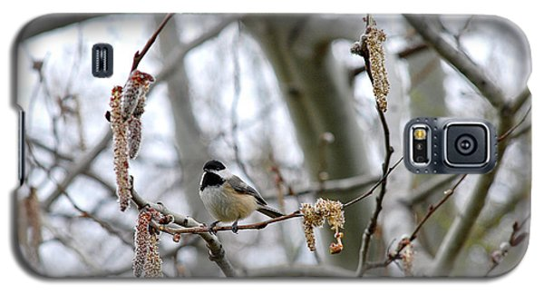 Galaxy S5 Case featuring the photograph Black-capped Chickadee 20120321_39b by Tina Hopkins