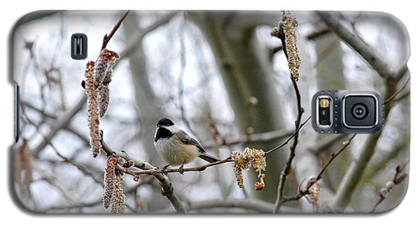 Black-capped Chickadee 20120321_39b Galaxy S5 Case