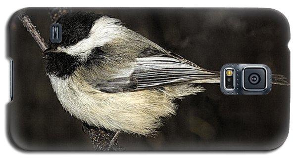 Black-capped Chickadee Galaxy S5 Case