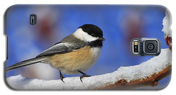 Black-capped Chickadee In Sumac Galaxy S5 Case