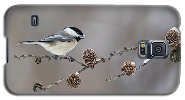 Galaxy S5 Case featuring the photograph Black-capped Chickadee by Mircea Costina Photography