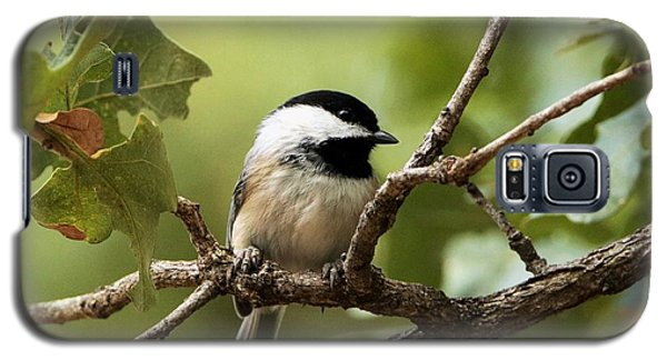 Black Capped Chickadee On Branch Galaxy S5 Case