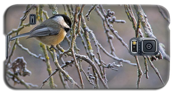 Black-capped Chickadee Galaxy S5 Case by Sean Griffin