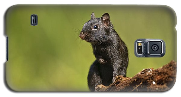 Black Chipmunk On Log Galaxy S5 Case