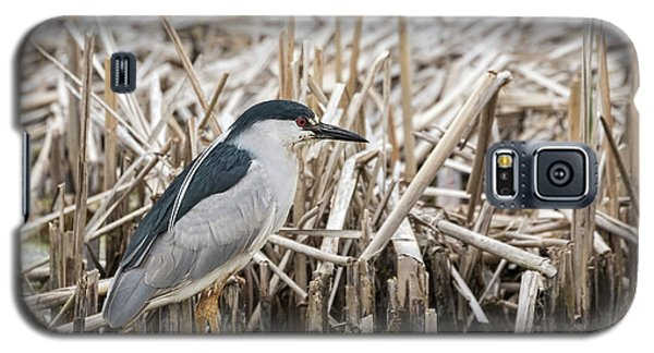 Black-crowned Night Heron 2017-1 Galaxy S5 Case by Thomas Young