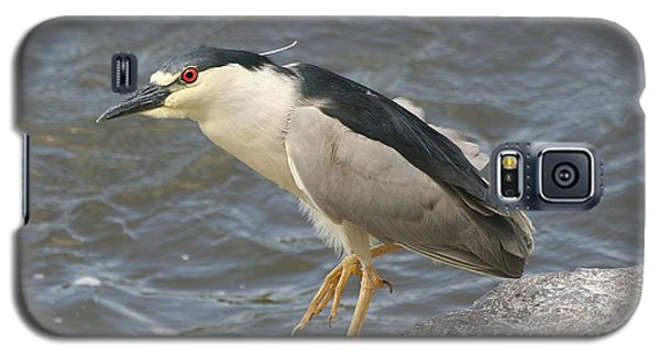 Galaxy S5 Case featuring the photograph Black-crowned Night Heron by Doris Potter