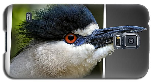 Black Crowned Night Heron Out Of Bounds Galaxy S5 Case