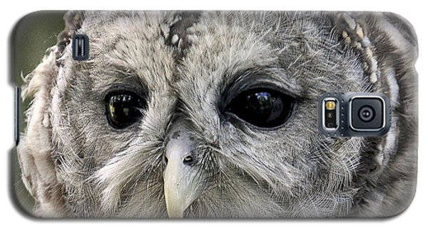 Black Eye Owl Galaxy S5 Case