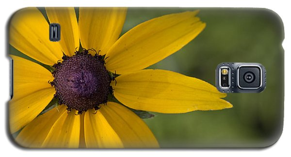 Black-eyed Susan Galaxy S5 Case