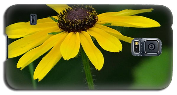 Black Eyed Susan Galaxy S5 Case