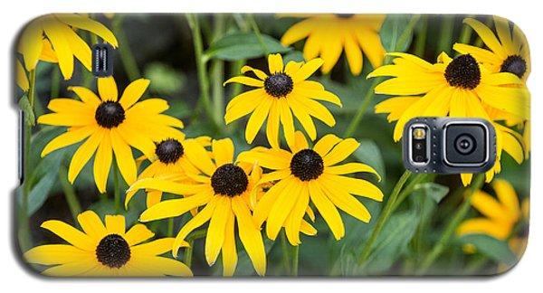 Black-eyed Susan Up Close Galaxy S5 Case