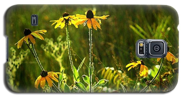Black Eyed Susans In The Wild Galaxy S5 Case by Jim Vance