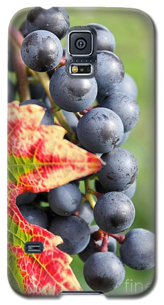 Black Grapes On The Vine Galaxy S5 Case