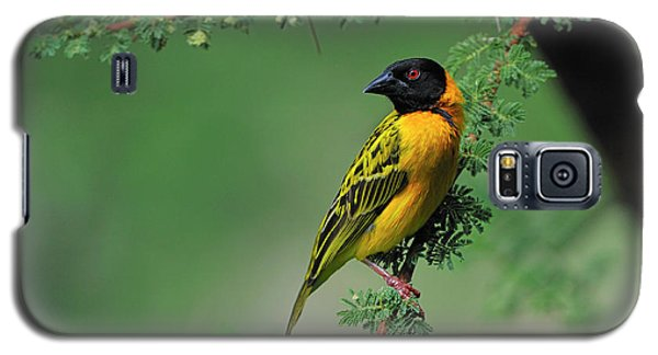 Black-headed Weaver Galaxy S5 Case