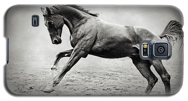 Black Horse In Dust Galaxy S5 Case
