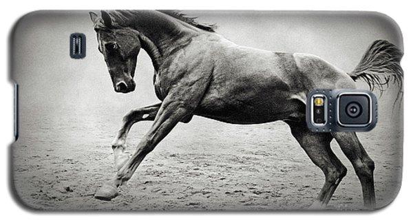 Black Horse In Dust Galaxy S5 Case