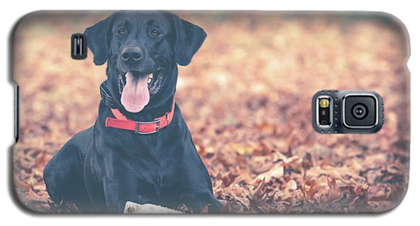 Black Labrador In The Fall Leaves Galaxy S5 Case