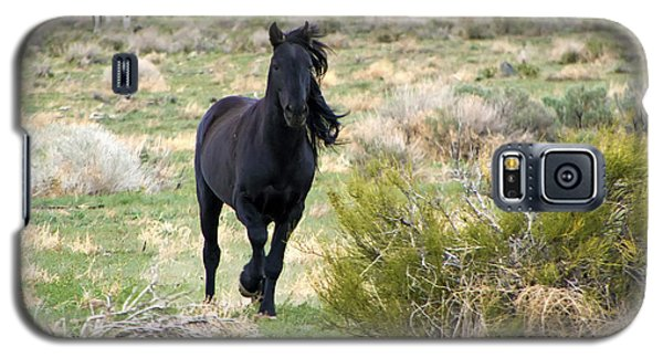 Black Mustang Stallion Running Galaxy S5 Case
