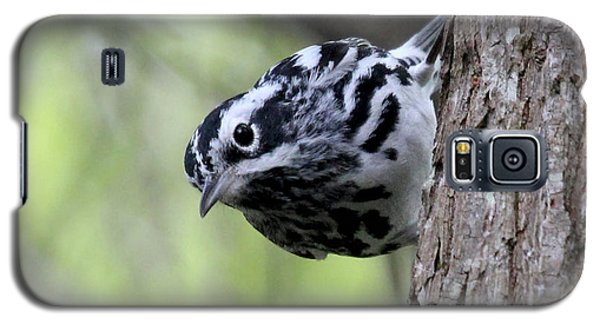 Black-n-white Warbler Galaxy S5 Case