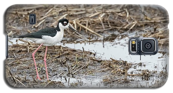 Black-necked Stilt 2017-1 Galaxy S5 Case by Thomas Young