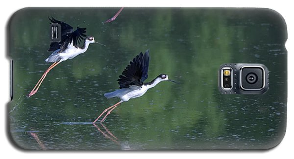 Black-necked Stilts 4302-080917-2cr Galaxy S5 Case