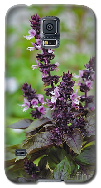 Black Opal Basil Flower Galaxy S5 Case