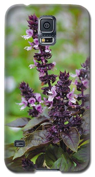 Black Opal Basil Flower Galaxy S5 Case