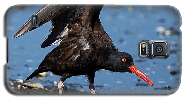 Black Oyster Catcher Galaxy S5 Case