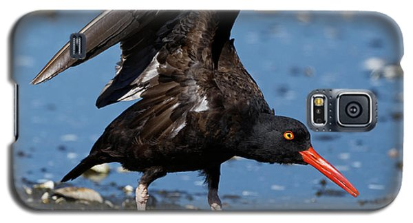 Black Oyster Catcher Galaxy S5 Case