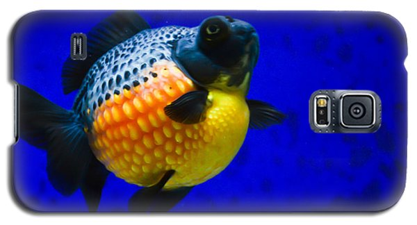 Black Pearl Goldfish Galaxy S5 Case