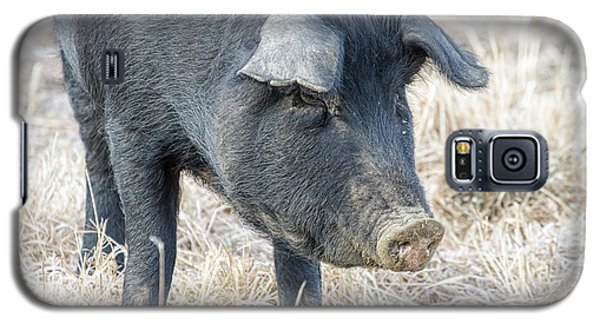 Galaxy S5 Case featuring the photograph Black Pig Close-up by James BO Insogna
